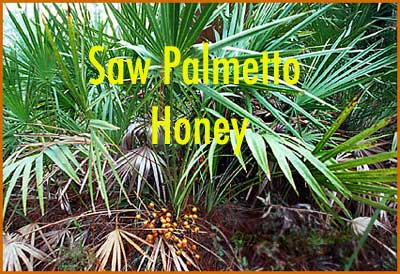 1 lb. Saw Palmetto Honey
